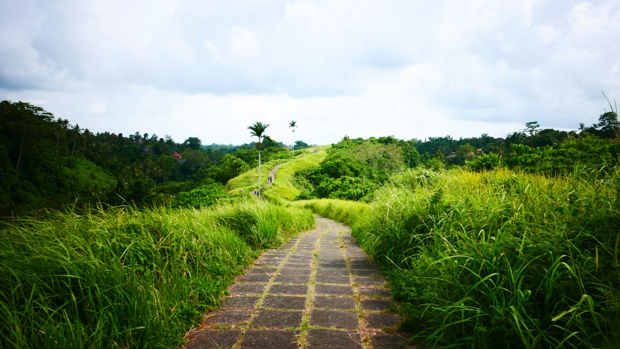 Bali Reisfelder